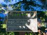 한 폭의 병풍 같은 화순 둔동마을 느티나무 숲