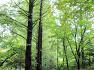 인천대공원 관모산 치유의 숲 힐링 코스