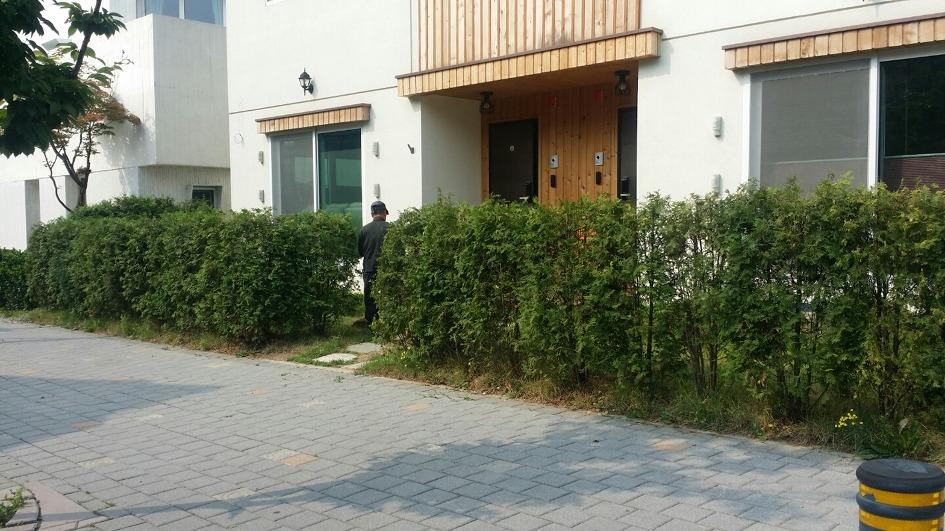 [더숲] 경기도 분당 판교동 주택정원 - 생울타리, 주차장 만들기