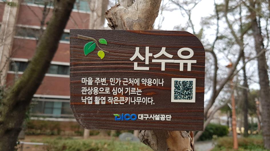 Daegu Spring Flower News-Cornus trees, flowers, efficacies, liquor, and tea, which make the sound of spring herald in Junggu-gu compensation compensation memorial park, Jung-gu, Daegu.