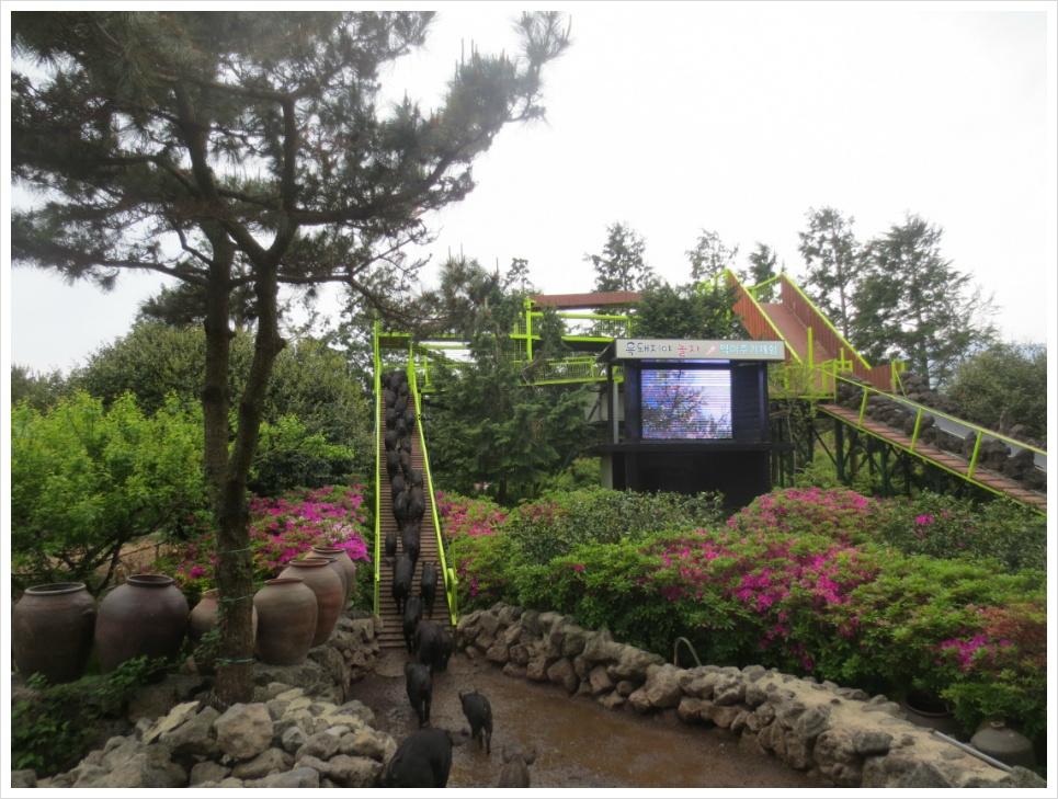 [2017 제주도] 수국 보러 갔다가 다른 것만 잔뜩 보고 온 휴애리자연생활공원