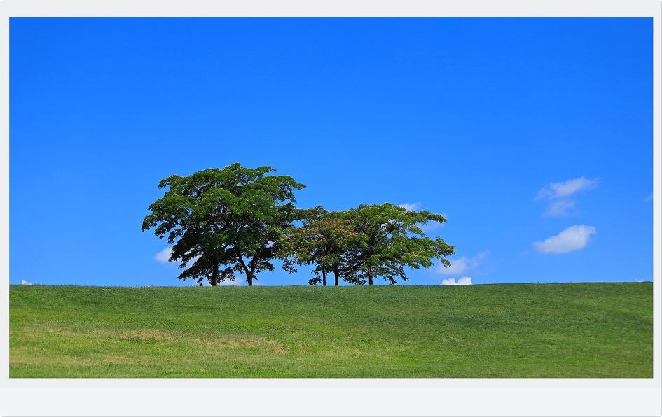 올림픽공원나홀로나무